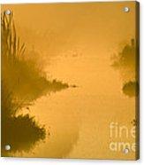 Golden Riverside Acrylic Print