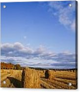 Golden Rolls Of Hay In A Field Acrylic Print