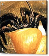 Golden Seashell Crab Still Life Acrylic Print