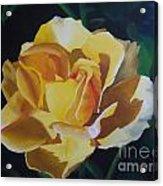 Golden Showers Rose Acrylic Print