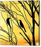 Golden Silhouette  Acrylic Print