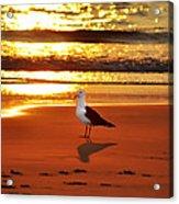 Golden Sunrise Seagull Acrylic Print