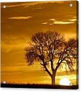 Golden Sunrise Silhouette Acrylic Print