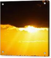Golden Sunset On Farmland Acrylic Print