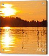 Golden Sunsset Acrylic Print