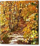 Golden Trail Acrylic Print