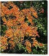 Golden Tree Moment Acrylic Print