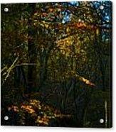 Golden Woodland Acrylic Print