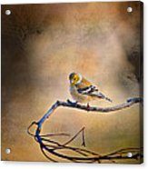 Goldfinch In Deep Thought Acrylic Print by J Larry Walker