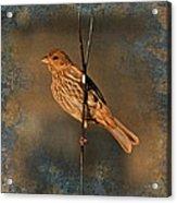 Good Moning Sunshine Iv Acrylic Print