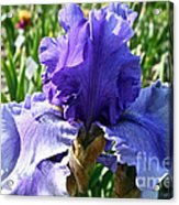 Good Morning Acrylic Print