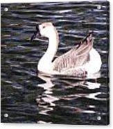 Goose And Lake Acrylic Print
