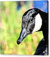 Goose Art Acrylic Print