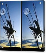 Goose At Dusk - Cross Your Eyes And Focus On The Middle Image Acrylic Print