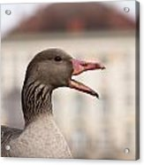 Goose At Nymphenburg Palace Acrylic Print by Andrew  Michael