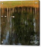 Goose Goose Duck Goose Acrylic Print by Trish Hale