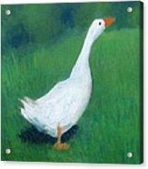 Goose On Green Acrylic Print