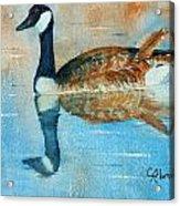 Goose Reflection Acrylic Print