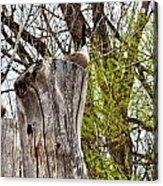 Goose Tree Acrylic Print