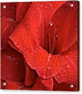 Gorgeous Glads Acrylic Print by Susan Herber
