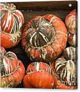 Gorgeous Gourds Acrylic Print