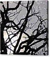 Goth Tree Acrylic Print
