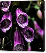 Gothic Bell Flower Acrylic Print