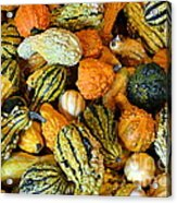 Gourdgeous Acrylic Print by Kevin Fortier