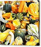Gourds And Squash Acrylic Print