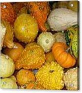 Gourds Galore Acrylic Print