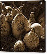Gourds In Sepia Acrylic Print