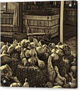 Gourds In Sepia Splendor Acrylic Print