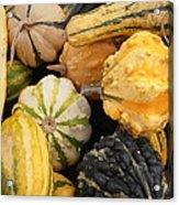 Gourds Acrylic Print by Kimberly Perry