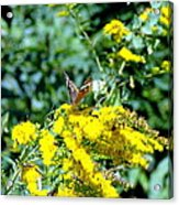 Graceful Butterfly Acrylic Print by Jose Lopez
