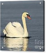 Graceful Moments Acrylic Print