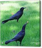 Grackles In The Yard Acrylic Print