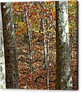 Graffiti Trees Acrylic Print