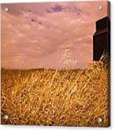 Grain Elevator And Crop Acrylic Print