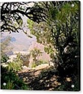 Grand Canyon Through Trees Acrylic Print