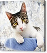 Grand Kitty Cuteness 2 Acrylic Print by Andee Design
