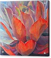 Grand Succulent Acrylic Print