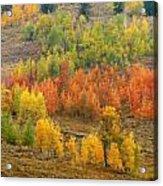 Grand Teton Fall Color Acrylic Print