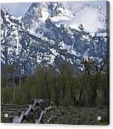 Grand Teton Fence Acrylic Print by Charles Warren