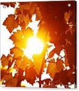 Grape Leaves Background Acrylic Print