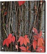 Grape Leaves On Column Acrylic Print