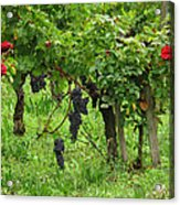 Grape Vines And Roses I Acrylic Print