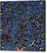 Grapes Acrylic Print by Barbara Walsh