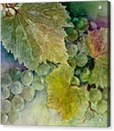 Grapes II Acrylic Print by Judy Dodds