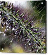 Grass After The Rain Acrylic Print