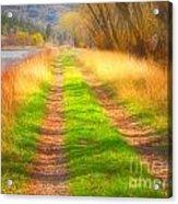 Grass And Shadows Acrylic Print